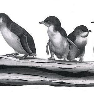 (CreativeWork) Little Penguins Limited Edition Print Ed. 70 of 100 by Alana Jones. Print. Shop online at Bluethumb.
