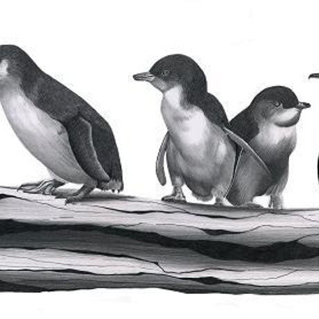 (CreativeWork) Little Penguins Limited Edition Print by Alana Jones. Drawings. Shop online at Bluethumb.