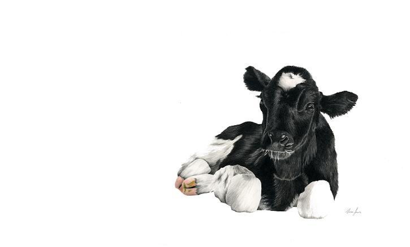 (CreativeWork) Holstein Cow Limited Edition Print by Alana Jones. Drawings. Shop online at Bluethumb.