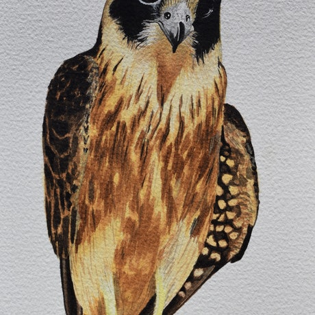 (CreativeWork) HOBBY (original) by Emma McIntosh. Watercolour Paint. Shop online at Bluethumb.