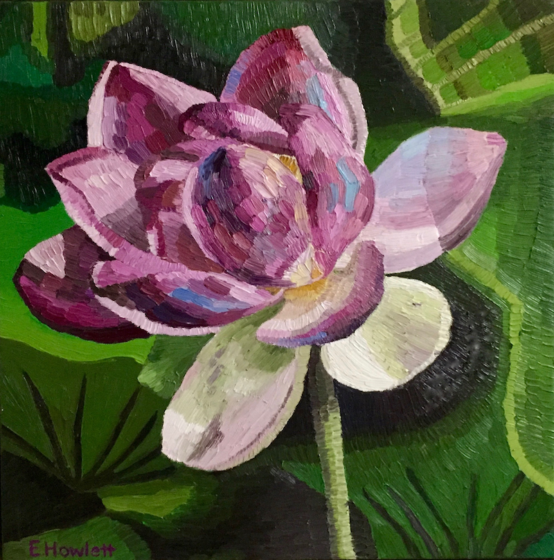 (CreativeWork) Nelumbo Lotus  by Elisabeth Howlett. oil-painting. Shop online at Bluethumb.