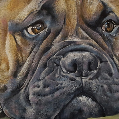 (CreativeWork) Bull Mastiff by Holley Ryan. Oil Paint. Shop online at Bluethumb.