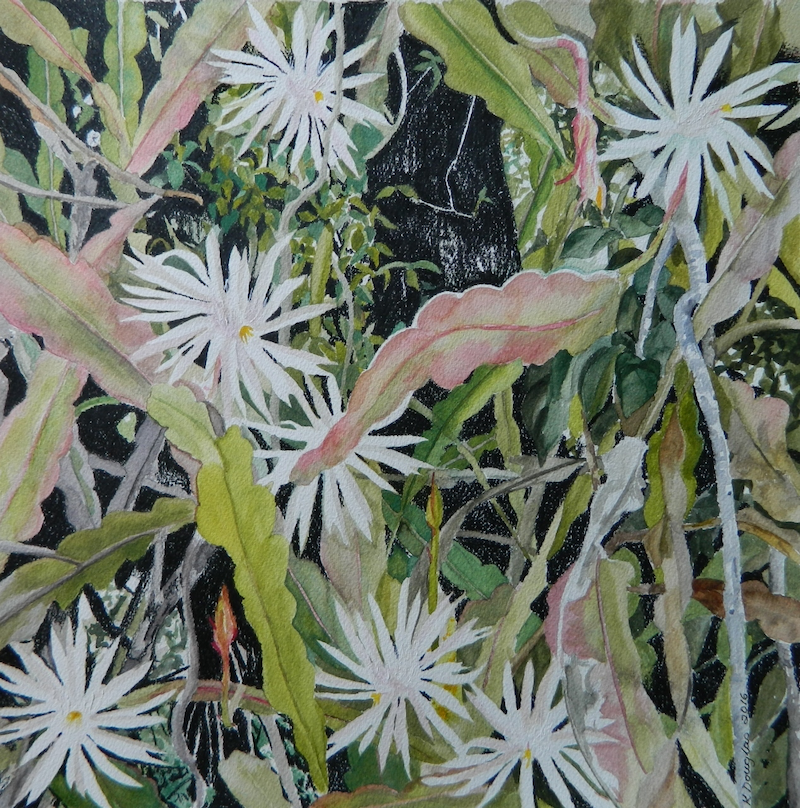 (CreativeWork) Night Blooming Cereus by Kate Douglas. mixed-media. Shop online at Bluethumb.