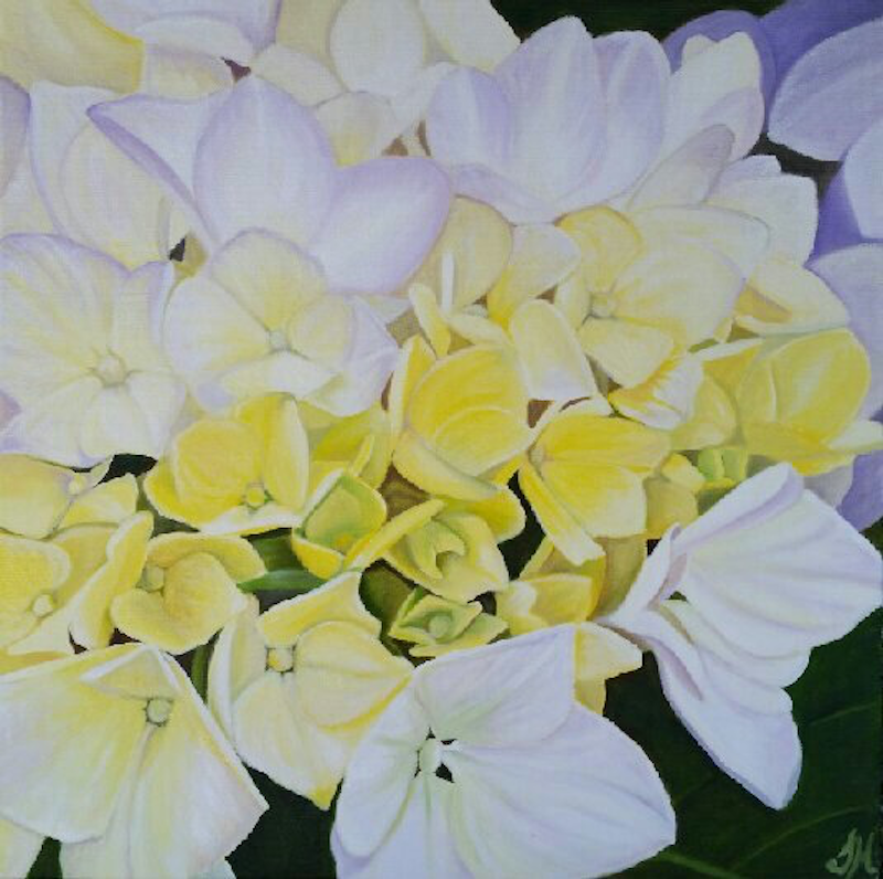 (CreativeWork) Yellow hydrangeas by Tracey Hall. oil-painting. Shop online at Bluethumb.
