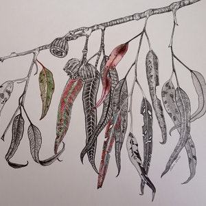 (CreativeWork) Out on a Limb No 3 by Delma White. drawing. Shop online at Bluethumb.