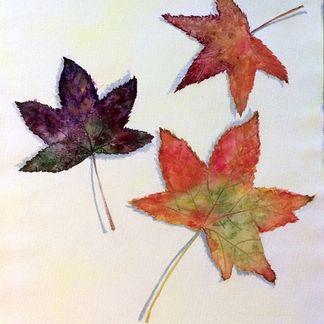 (CreativeWork) Autumn maple  leaves by Jing Tian. Watercolour Paint. Shop online at Bluethumb.