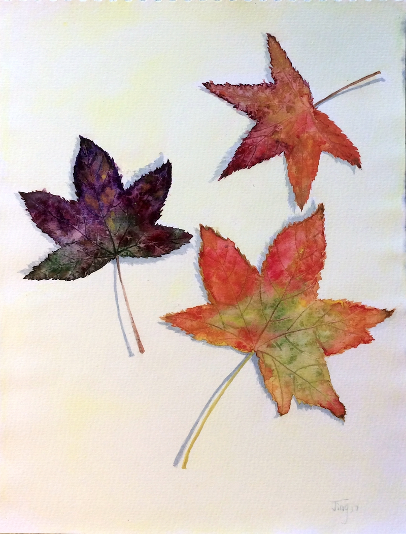 (CreativeWork) Autumn maple  leaves by Jing Tian. watercolour. Shop online at Bluethumb.