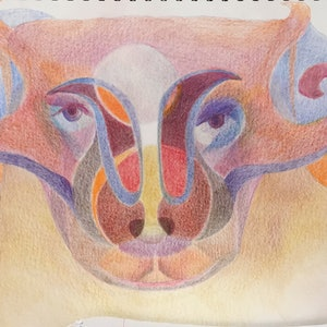 (CreativeWork) Bull  by Sophie Hammersley. drawing. Shop online at Bluethumb.