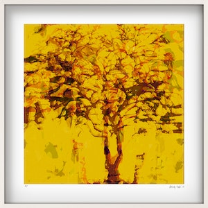(CreativeWork) 'Wanaka Sienna tree' white box framed Ed. 3 of 25 by George Hall. print. Shop online at Bluethumb.