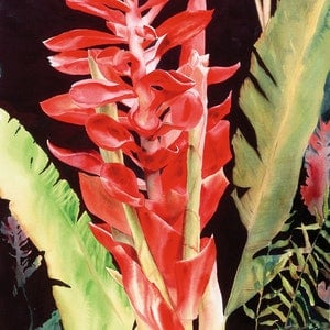 "(CreativeWork) THE CLASSIC SERIES     ""GINGER EXOTICA""  ORIGINAL  by Sue PHELOUNG. watercolour. Shop online at Bluethumb."