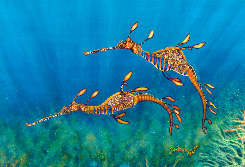 (CreativeWork) Weedy Sea Dragons limited edition print 1 of 50 by Renata Bruynzeel. Acrylic Paint. Shop online at Bluethumb.