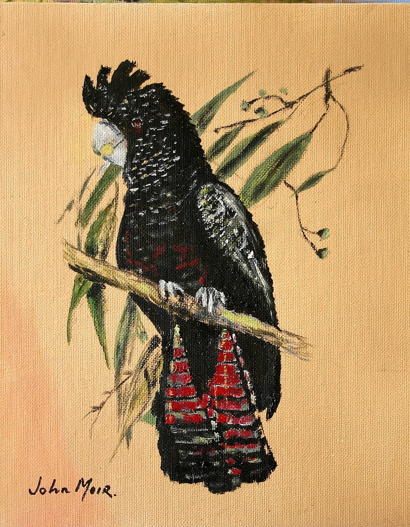 (CreativeWork) Black Cockatoo by John MOIR. oil-painting. Shop online at Bluethumb.