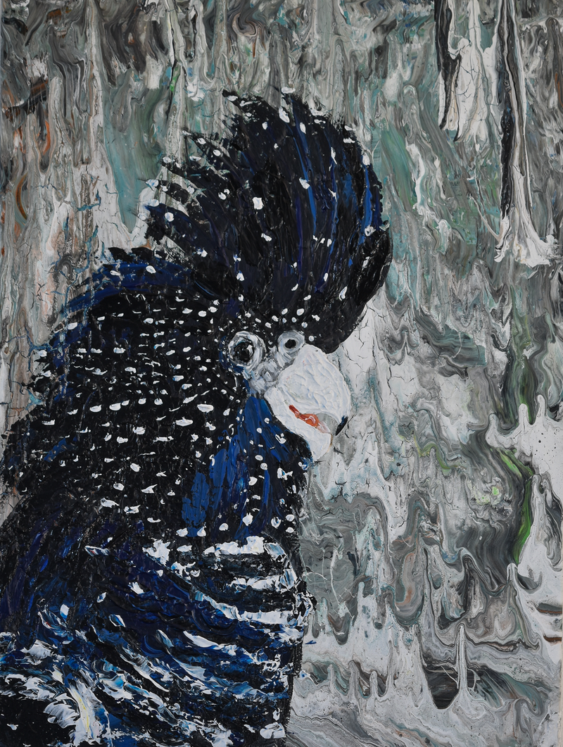 (CreativeWork) Black Cockatoo  (Black Wooden Frame) by Deborah Christensen. arcylic-painting. Shop online at Bluethumb.