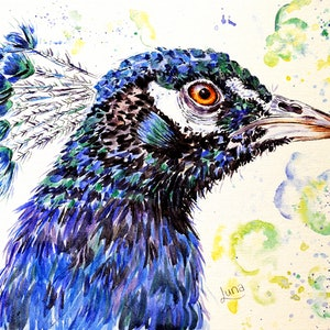 (CreativeWork) P Is For Peacock by Luna Vermeulen. watercolour. Shop online at Bluethumb.