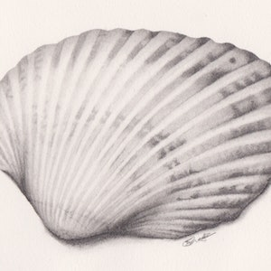 (CreativeWork) Shell by Samantha Blanks. drawing. Shop online at Bluethumb.