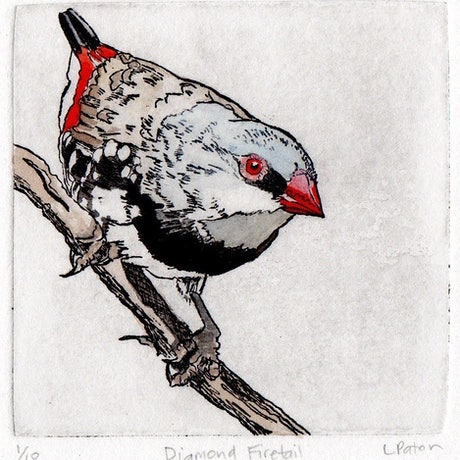 (CreativeWork) Diamond Firetail by Lydie Paton. Mixed Media. Shop online at Bluethumb.
