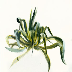 (CreativeWork) 8 foot Aloe by Alex Sinclair. Other Media. Shop online at Bluethumb.