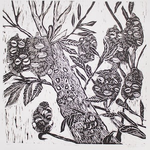 (CreativeWork) Banksia tree Ed. 10 of 15 by Matthew Broughton. print. Shop online at Bluethumb.