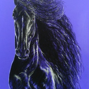 (CreativeWork) ROYAL FRIESIAN by Louise Green. drawing. Shop online at Bluethumb.