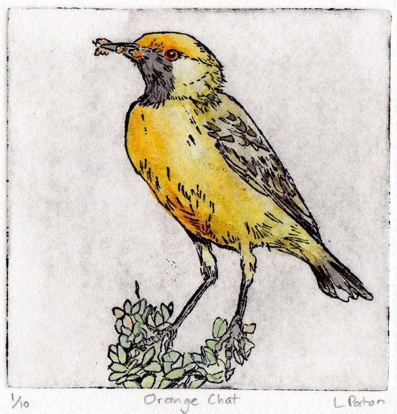 (CreativeWork) Orange Chat by Lydie Paton. mixed-media. Shop online at Bluethumb.