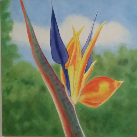 (CreativeWork) Strelitizia by Heather Browne. Oil Paint. Shop online at Bluethumb.