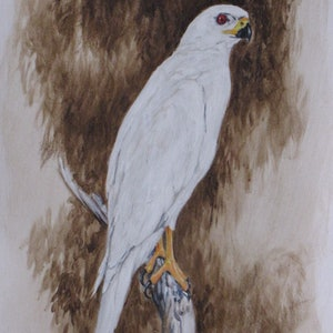 (CreativeWork) Grey Falcon by Raymond Wittenberg. arcylic-painting. Shop online at Bluethumb.