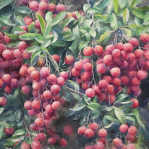 (CreativeWork) Sweet Litchies  (print of my original watercolor paining) Ed. 1 of 40 by Richard(Tiejun) Chao. print. Shop online at Bluethumb.