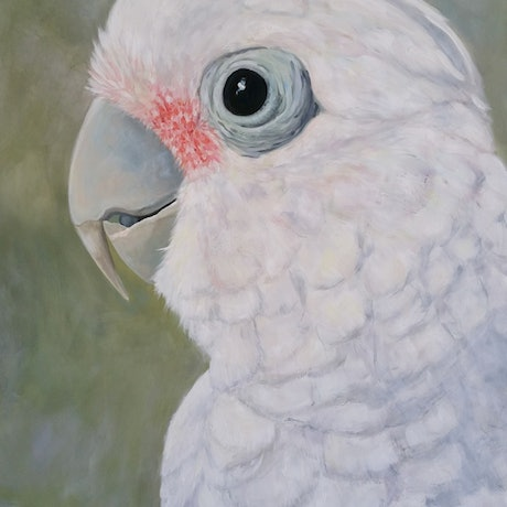 (CreativeWork) Lily- corella - goffin cockatoo by Naomi Veitch. Acrylic Paint. Shop online at Bluethumb.