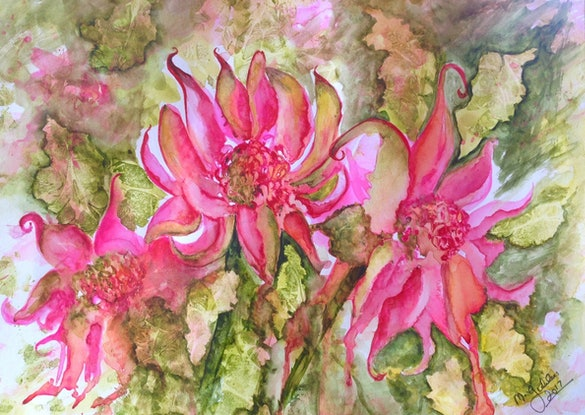 (CreativeWork) Pink Passion Waratah by Michael Giddens. Watercolour Paint. Shop online at Bluethumb.