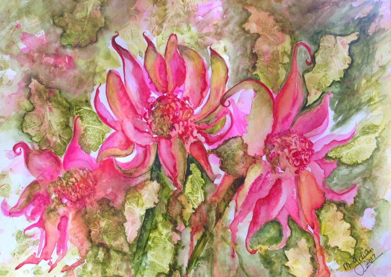 (CreativeWork) Pink Passion Waratah by Michael Giddens. watercolour. Shop online at Bluethumb.