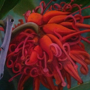 (CreativeWork) Red beauty by Kathy Nolan. oil-painting. Shop online at Bluethumb.