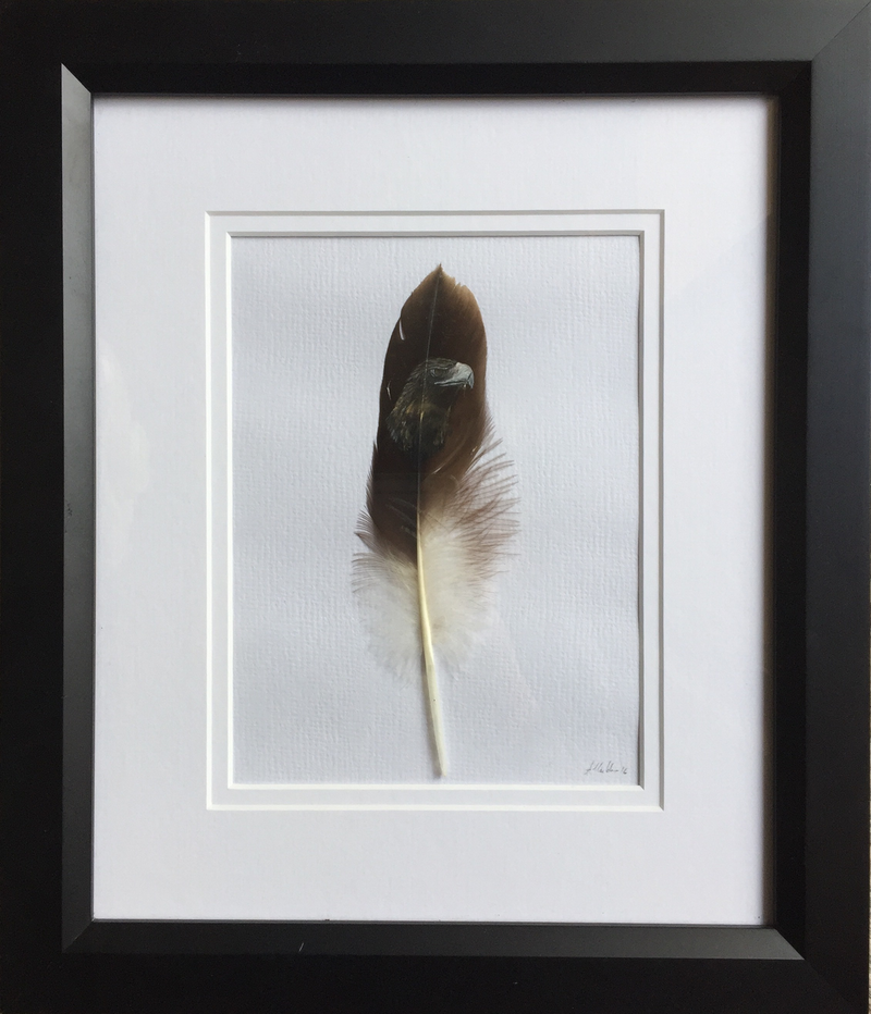 (CreativeWork) Wedge Tailed Eagle on Feather Framed  by Amanda Skye. arcylic-painting. Shop online at Bluethumb.