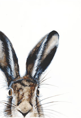(CreativeWork) HELLO I AM HARE by Fran Pidgeon. Watercolour Paint. Shop online at Bluethumb.