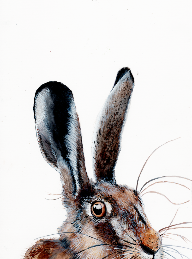 (CreativeWork) HELLO I HARE YOU! by Fran Pidgeon. Watercolour Paint. Shop online at Bluethumb.