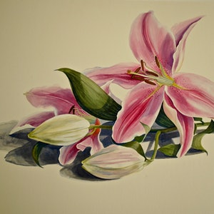 (CreativeWork) Oriental Lily 1 by Carol Croad. watercolour. Shop online at Bluethumb.