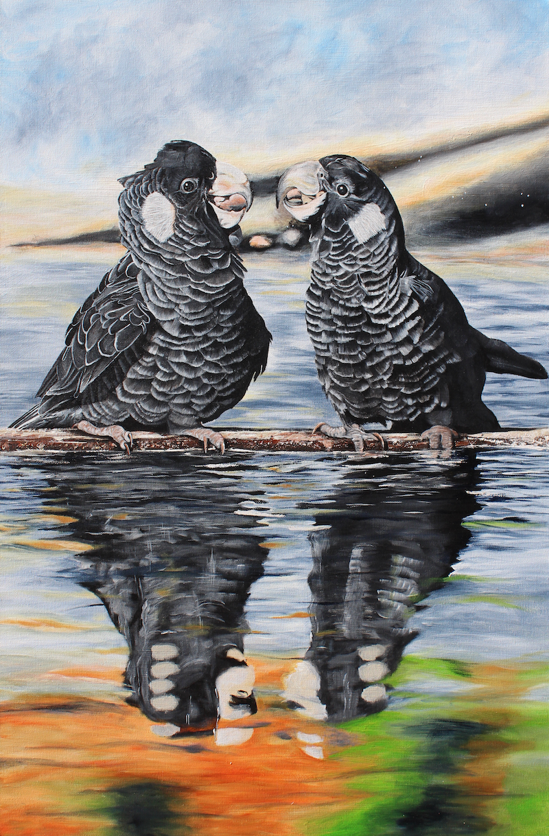 (CreativeWork) Black Cockatoo Bliss by Jess King. arcylic-painting. Shop online at Bluethumb.