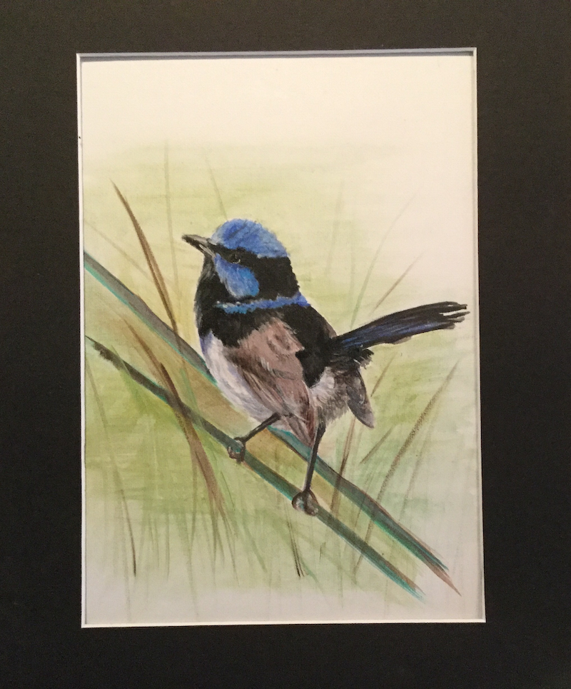 (CreativeWork) Fairy wren by Helen Pilkington. arcylic-painting. Shop online at Bluethumb.