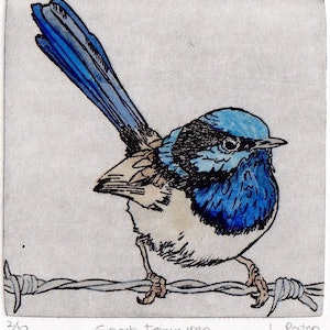 (CreativeWork) Superb Fairywren by Lydie Paton. mixed-media. Shop online at Bluethumb.