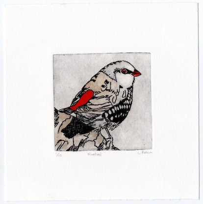 (CreativeWork) Diamond Firetail #2 by Lydie Paton. Mixed Media. Shop online at Bluethumb.