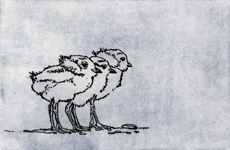 (CreativeWork) Plover Chicks (Etching) Ed. 1 of 10 by Lydie Paton. print. Shop online at Bluethumb.