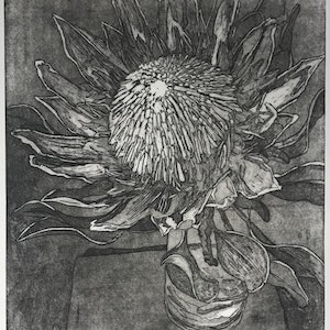 (CreativeWork) King Protea (Etching) Ed. 1 of 50 by Lydie Paton. print. Shop online at Bluethumb.