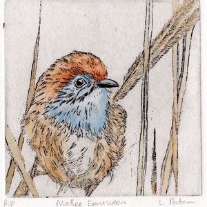 (CreativeWork) Mallee Emu-wren by Lydie Paton. mixed-media. Shop online at Bluethumb.