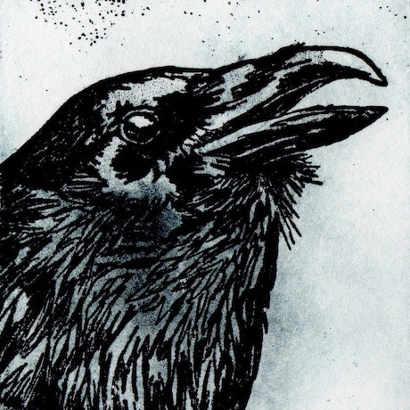 (CreativeWork) Raven (Etching) Ed. 1 of 10 by Lydie Paton. Print. Shop online at Bluethumb.