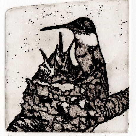 (CreativeWork) Hummingbird (Etching) Ed. 1 of 10 by Lydie Paton. Print. Shop online at Bluethumb.