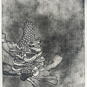 (CreativeWork) Banksia Cone (Etching) Ed. 1 of 50 by Lydie Paton. print. Shop online at Bluethumb.