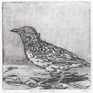 (CreativeWork) Western Bowerbird II (Etching) Ed. 1 of 10 by Lydie Paton. print. Shop online at Bluethumb.