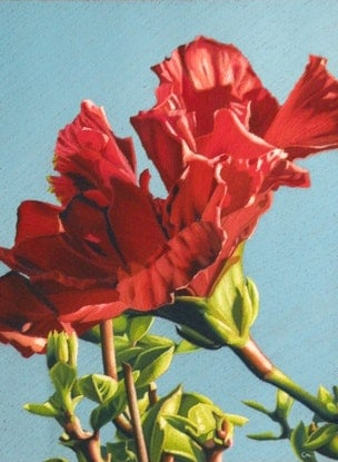 (CreativeWork) Hibiscus by Colin Madgwick. Other Media. Shop online at Bluethumb.