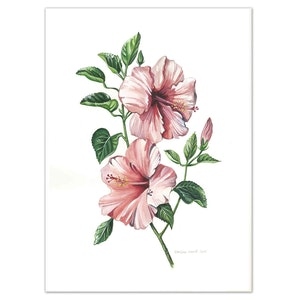 (CreativeWork) Australian Hibiscus Flowers Watercolour painting - Limited edition print Ed. 100 of 100 by Darlene Lavett. print. Shop online at Bluethumb.