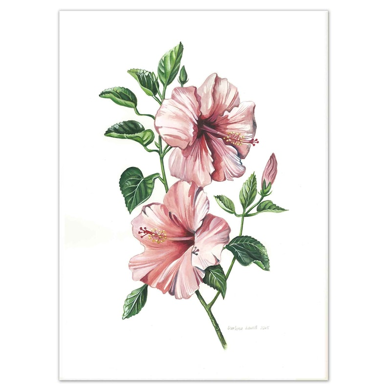 Australian Hibiscus Flowers Watercolour Painting Limited Edition
