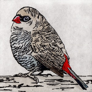 (CreativeWork) Beautiful Firetail (Etching, 2/10) by Lydie Paton. mixed-media. Shop online at Bluethumb.